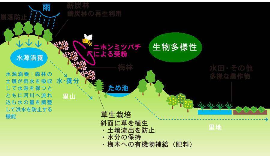 循環型の梅の栽培