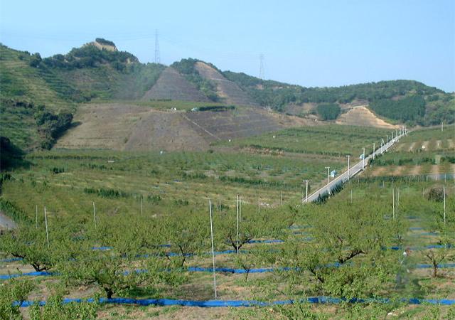 和歌山みなべの土壌だからこそできた紀州南高梅という味の逸品